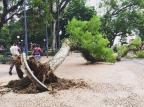 Árvore cai no Centro de Porto Alegre Bruna Cabrera/Instagram/Reprodução
