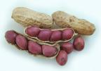 Pesquisa mostra relação entre alergia a amendoim e asma Stock.Xchng/Divulgação