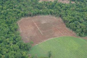 Desmatamento no Estado reduz em 102 hectares  IBAMA/Divulgação