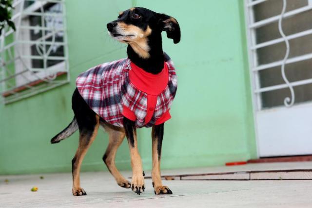 Brasileiros preferem cães a gatos, aponta IBGE Júlio Cordeiro/Agencia RBS