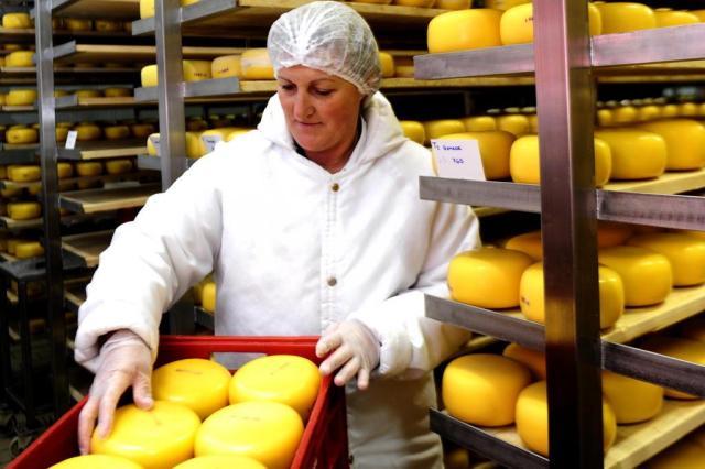 Após descoberta de fraude, produtores de queijo reiteram foco em qualidade para afastar suspeitas Roni Rigon/Agencia RBS