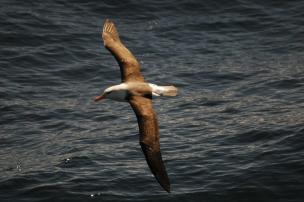 Cheiro funciona como bússola para os pássaros no céu Ver Descrição/Ver Descrição