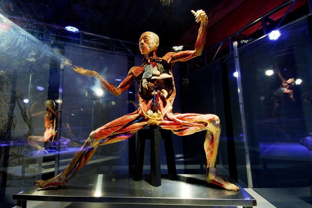 Exposição traz nove corpos humanos a Porto Alegre Paulo Paiva/Human Bodies / Divulgação