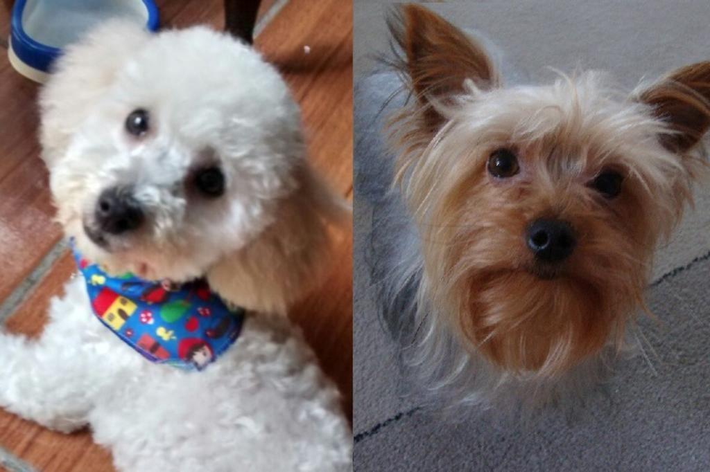 Dois dias depois, família segue procurando cães levados em roubo de carro Arquivo Pessoal/Arquivo Pessoal