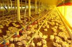 Produção de alimentos cresce em junho puxada pelo setor de aves, diz IBGE Prefeitura municipal/Divulgação