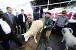 Primeiros animais da Expointer chegam ao parque Assis Brasil