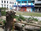 Corte de árvore na Praça Saldanha Marinho gera curiosidade de leitores Cristian Fabiano Leal Garcia/Divulgação