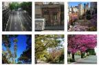 Qual é a sua rua favorita em Porto Alegre? Reprodução/Reprodução