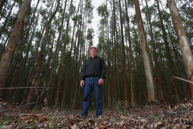 Produtores buscam mais garantias para investir no setor florestal Diego Vara/Agencia RBS