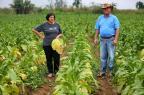 Seguro restrito para recuperar as perdas dos produtores rurais Félix Zucco/Agencia RBS