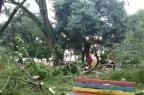 Queda de árvore fere duas adolescentes em praça de Ijuí Alex Frantz/Rádio Progresso de Ijuí/Especial
