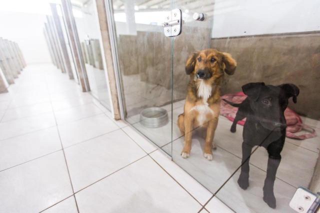 Mercado para pets tem serviços que vão de resort até ceia de Natal Omar Freitas/Agencia RBS