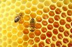 Gisele Loeblein: Danrlei retira projeto sobre produção de mel que causou polêmica Mateusz Atroszko/Stock.xchng