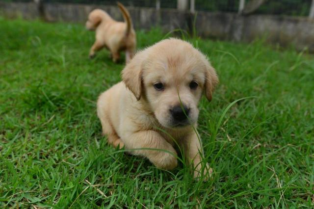 Mel e Thor são os nomes mais comuns para cães, diz pesquisa Lucas Correia/Agência RBS