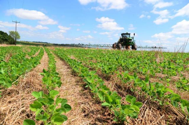Aumento da produtividade deve elevar em 15,3% colheita de grãos na próxima safra Diogo Zanatta/Especial