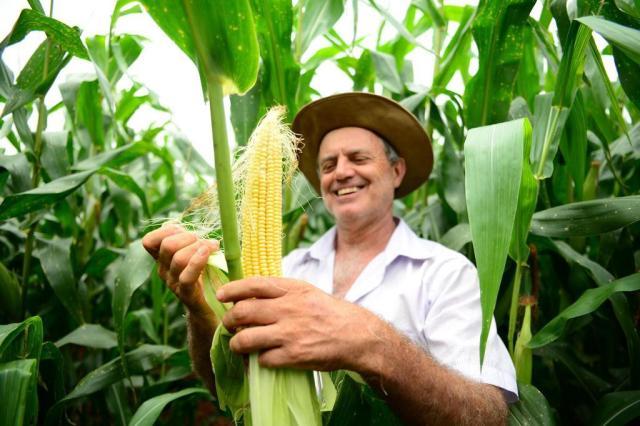 Milho tem alta produtividade, mas área plantada é a menor da série histórica Diogo Zanatta/Especial