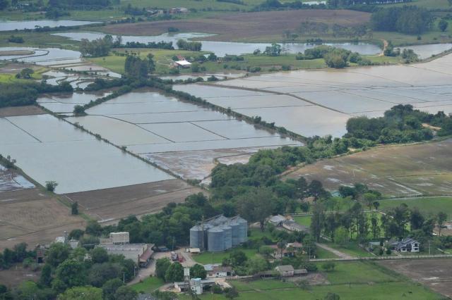 Mais da metade da área plantada com arroz na região central tem colheita incerta Jean Pimentel/Agencia RBS