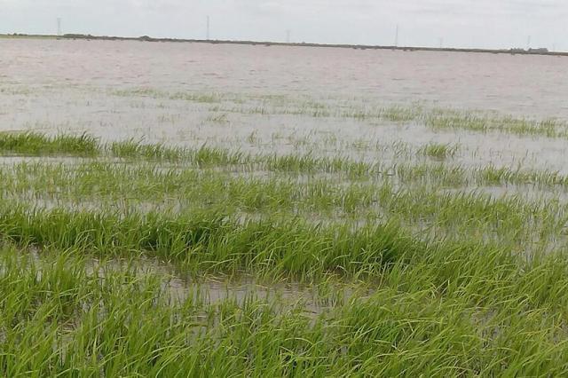 O socorro possível ao produtor de arroz Federarroz/Divulgação