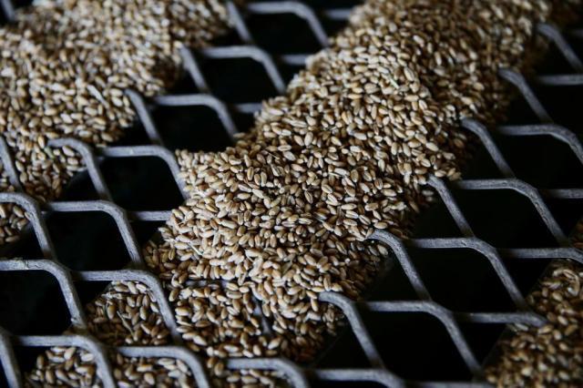 Opção diferente para o trigo do Rio Grande do Sul no próximo inverno Félix Zucco/Agencia RBS