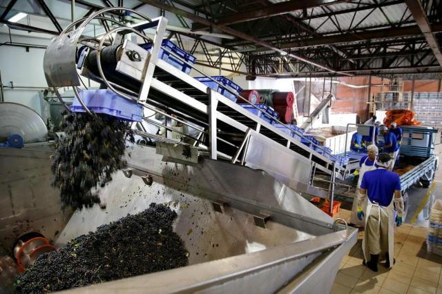 Quebra da safra de uva chega a quase 50% Fernando Gomes/Agencia RBS