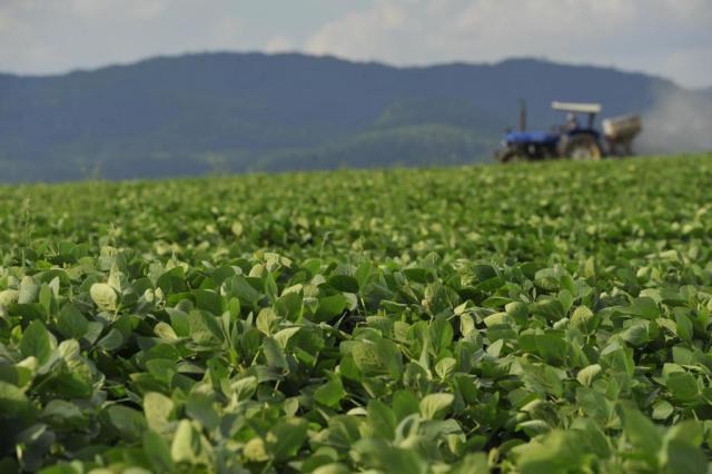 Apetite chinês deve alimentar agronegócio brasileiro Germano Rorato/Agencia RBS