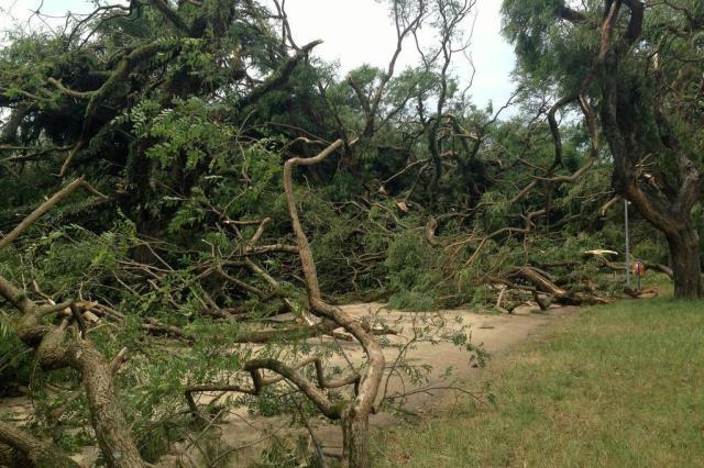 Tempestade causou devastação no Parque Marinha do Brasil Bruna Scirea/Agencia RBS