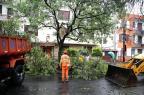Chuva não deve atrapalhar retirada de árvores caídas neste domingo André Ávila/Agência RBS