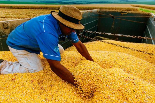 Safra de grãos 2015/16 deve ser de 210,3 milhões de toneladas, diz Conab Omar Freitas/Agencia RBS
