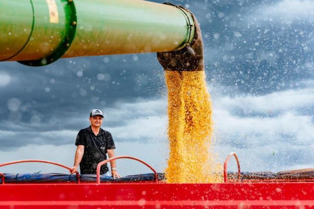 Safra de milho é colhida com bom rendimento e alta de preço no Rio Grande do Sul Omar Freitas/Agencia RBS
