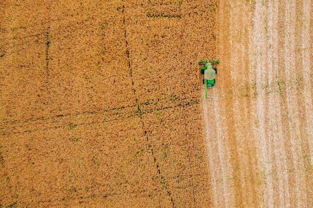 Milho sai de azarão para grata surpresa nesta safra de verão Omar Freitas/Agencia RBS