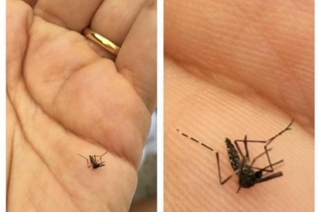 Mulher do apresentador Pedro Bial mata mosquito transmissor do zika vírus e faz protesto no Instagram (Instagram/Reprodução)