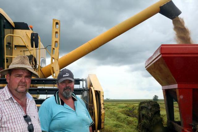 Custos na produção reduzem rentabilidade do arroz  Tadeu Vilani/Agencia RBS