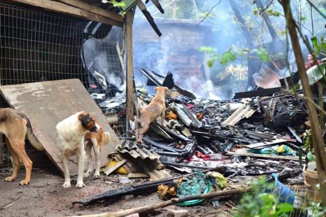 Mutirão ajudará a reconstruir canil atingido por incêndio em Viamão Divulgação/Projeto Mãos e Patas