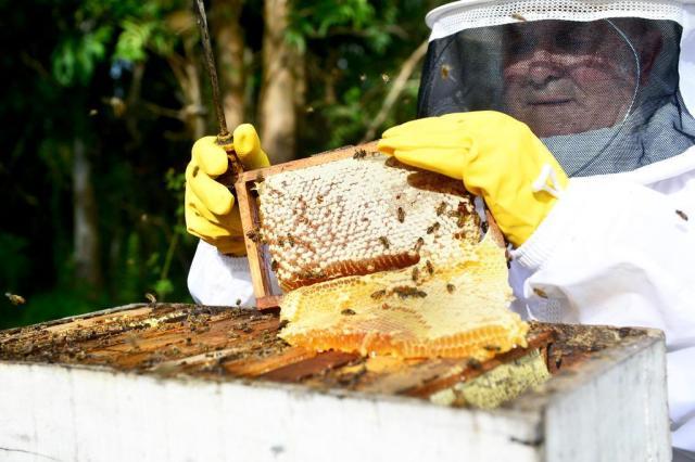 El Niño faz produção de mel despencar 80% Artur Alexandre/Agencia RBS