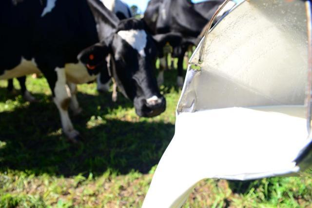 Produção de leite encolhe, preço sobe Diogo Zanatta/Especial