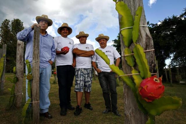 Produtores gaúchos investem em frutas exóticas Adriana Franciosi/Agencia RBS