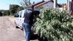 Plantação de maconha é apreendida e irmãos são presos em Gravataí Polícia Civil / Divulgação/Divulgação