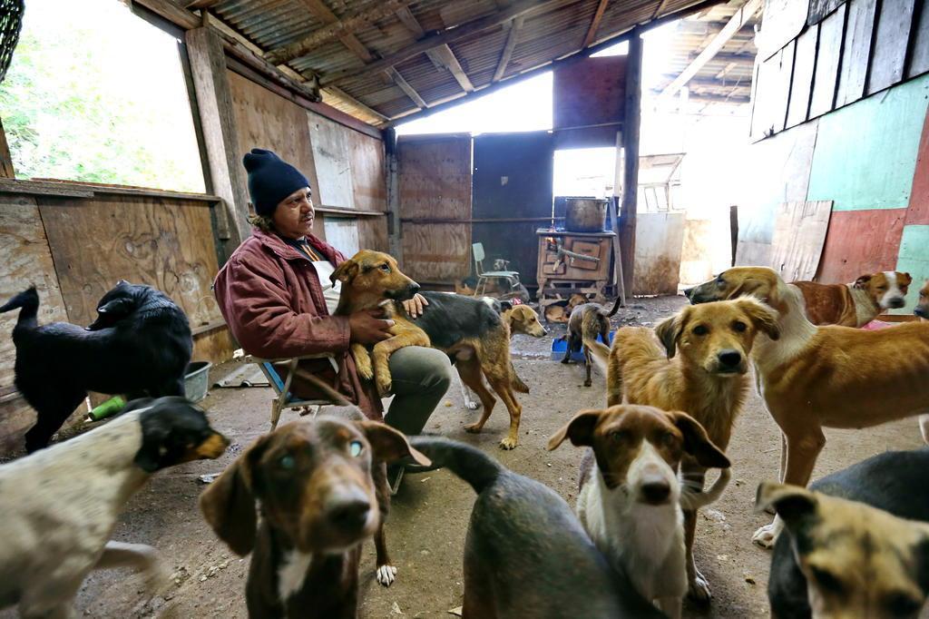 Homem que salvou cães da enchente precisa de ajuda para alimentar 140 animais Lauro Alves/Agencia RBS