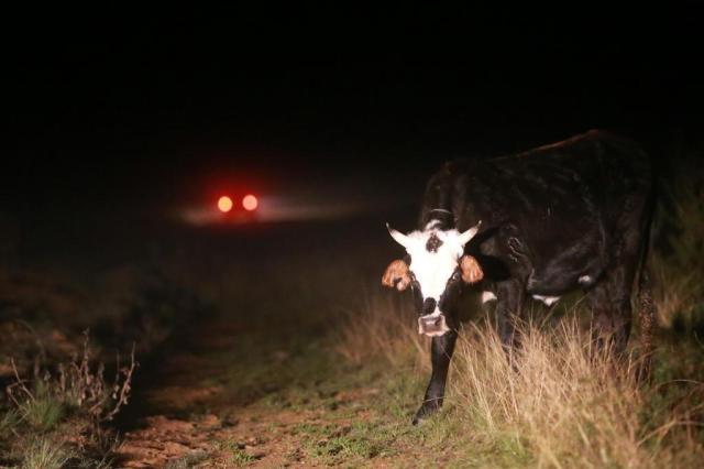 BM reforça segurança em áreas rurais para evitar abigeato Diego Vara/Agencia RBS