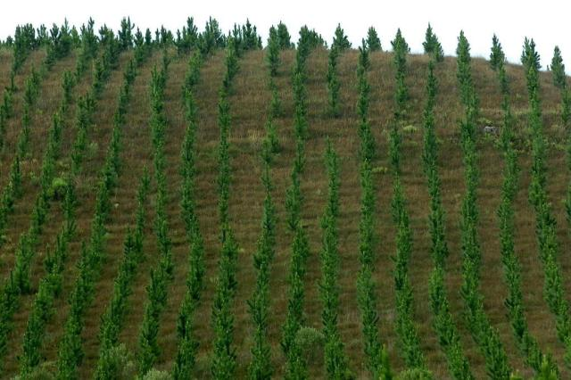 Florestas plantadas terão mudanças nas regras Daniela Xu/Agencia RBS