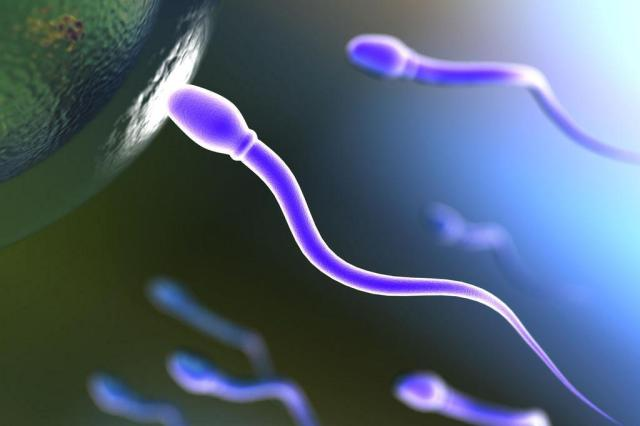 Pesquisa abre caminho para embrião sem óvulo Jeisa P./Morguefile