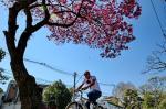 Primavera nas ruas de Porto Alegre