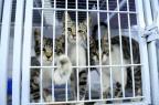 Para especialistas, inaplicabilidade das leis e falta de órgãos minimizam problema dos direitos dos animais Germano Rorato/Agencia RBS