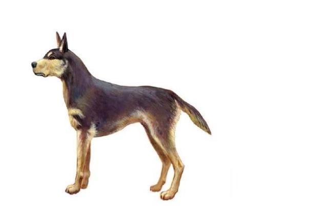 Em Pelotas, arqueólogos encontram o registro mais antigo de um cão domesticado no Brasil Revista del Museo de Antropología, do Peru/