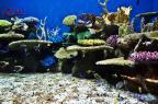 O AquaRio, aquário marinho no Rio, deve abrir as portas no dia 9 AquaRio, divulgação / Divulgação/Divulgação