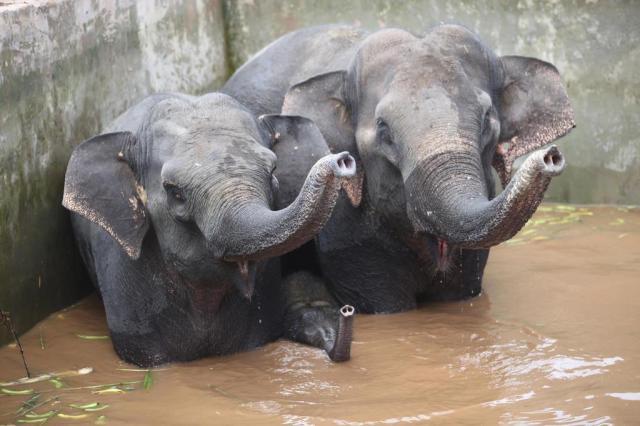 Três elefantes presos em depósito de água são resgatados na China China OUT/AFP