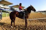 Cavalos são preparados para a disputa do GP Bento Gonçalves