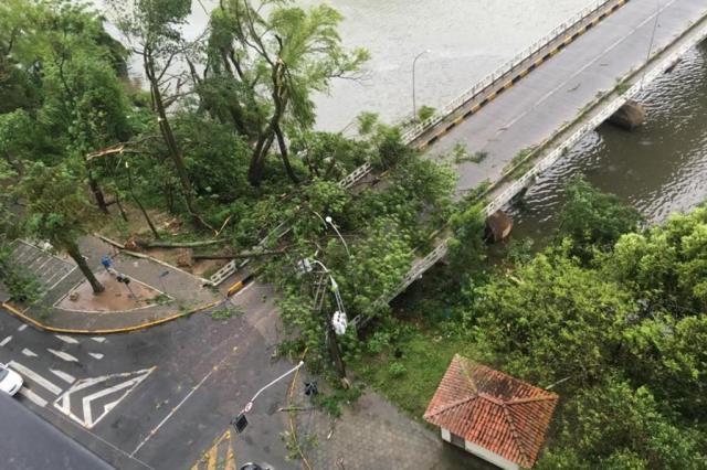 Criança morre atingida por árvore em Tubarão, diz Defesa Civil de Santa Catarina Joares Ponticelli/Arquivo Pessoal