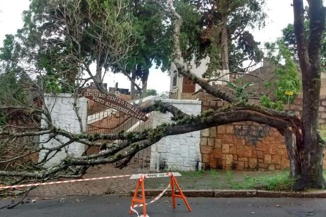 Após sete meses de alerta à Smam, árvore cai no cemitério judaico de Porto Alegre Mari Kvitko/Cemitério Centro Israelita Porto Alegrense