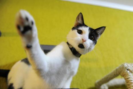 Lamber os pelos, tomar água da torneira:entenda o que significam as ações dos gatos (Marcelo Oliveira/Agencia RBS)